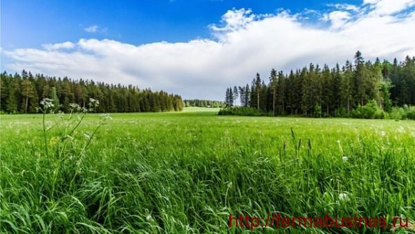 Зеленая луговая трава