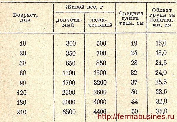 Вес и размеры нутрий по возрастным категориям