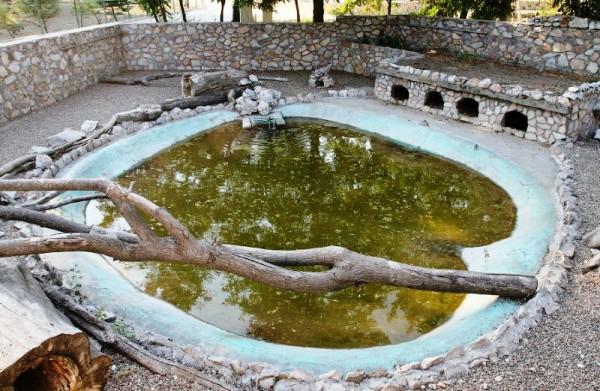 Дворик с бассейном для нутрий