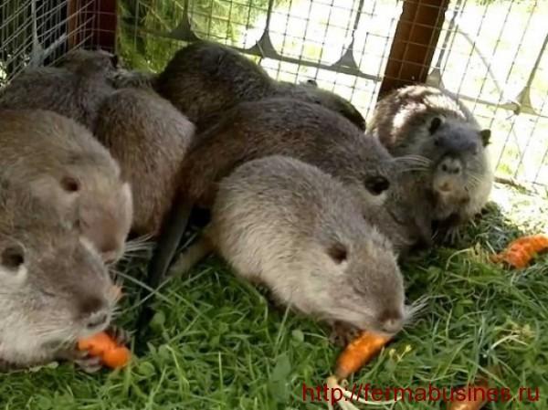 Морковь - отличный источник витаминов