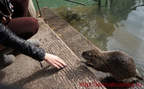 Эти животные обожают воду