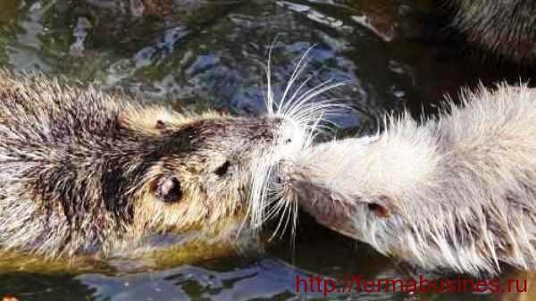 Самка обнюхивает самца