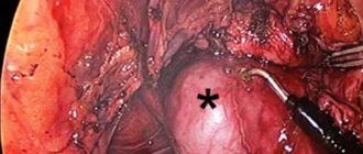 Воспаление семенников нутрий