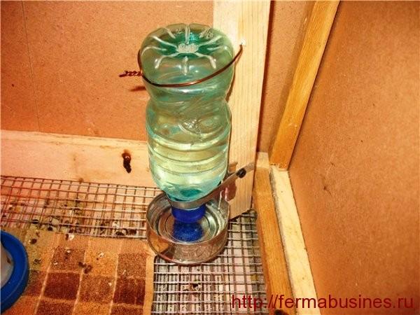Поилка из пластиковой бутылки для перепелов