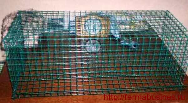 Бескаркасная клетка для перепелов