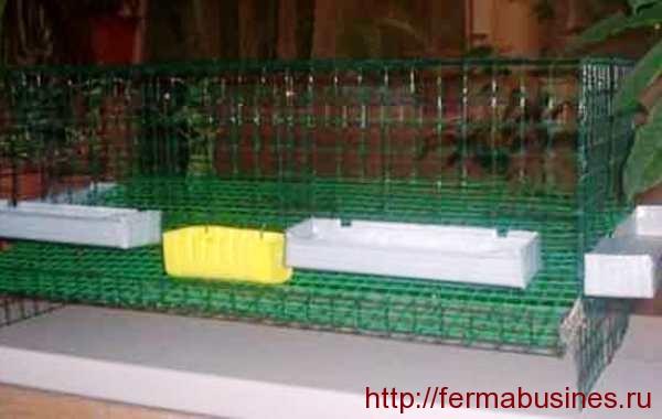 Бескаркасная клетка из сетки для перепелов