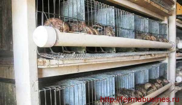 Выращивание и содержание перепелов в домашних условиях. Кормушки в форме желобов