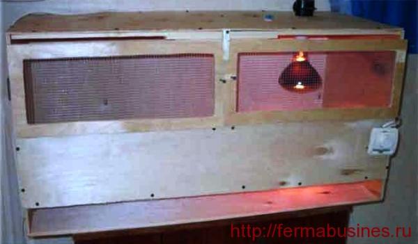 Лампа для обогрева брудера. Как сделать брудер для перепелят своими руками