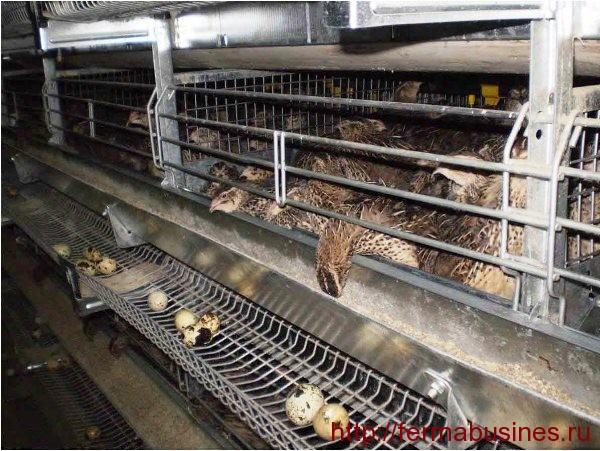 Идеальные условия для содержания птицы
