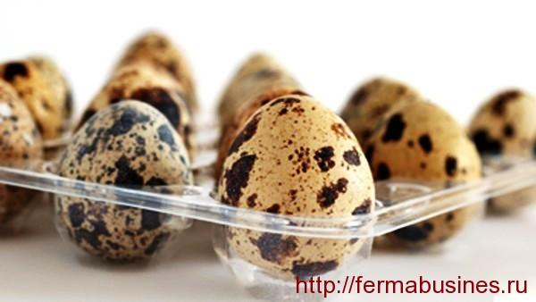 Перепелиные яйца в лотке