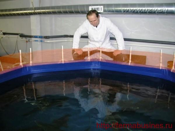 Бассейн для выращивания и разведения раков