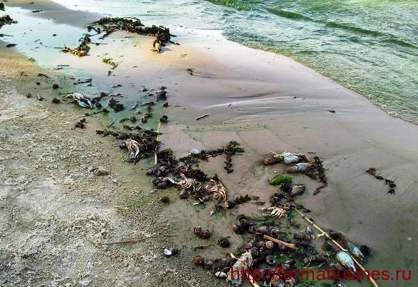 Мертвые ракообразные на берегу реки