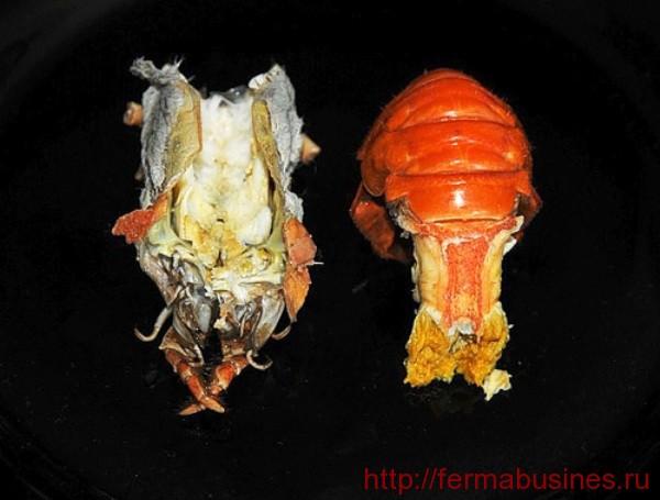 Жабры и брюшко
