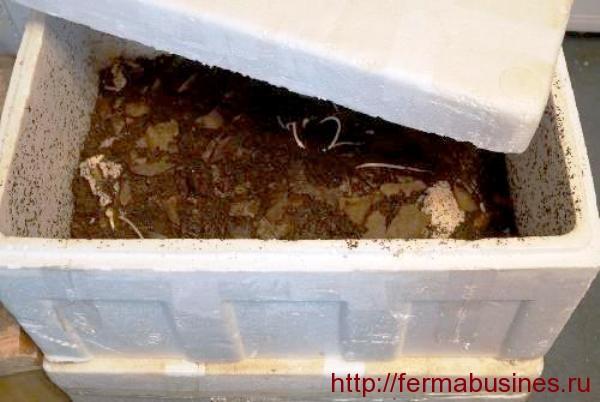 Ящик для хранения червя