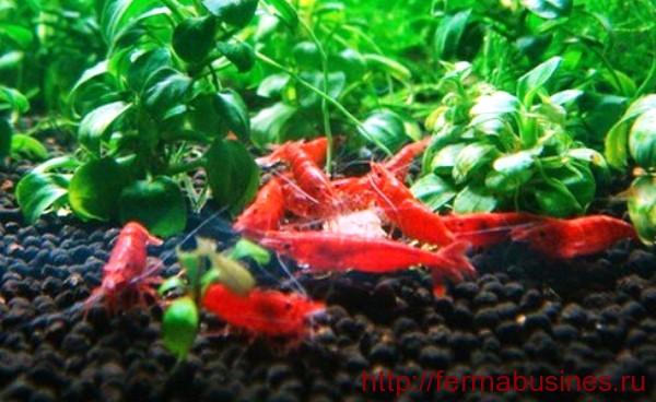 Декоративные аквариумные