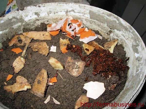 Разложенный корм поверх грунта